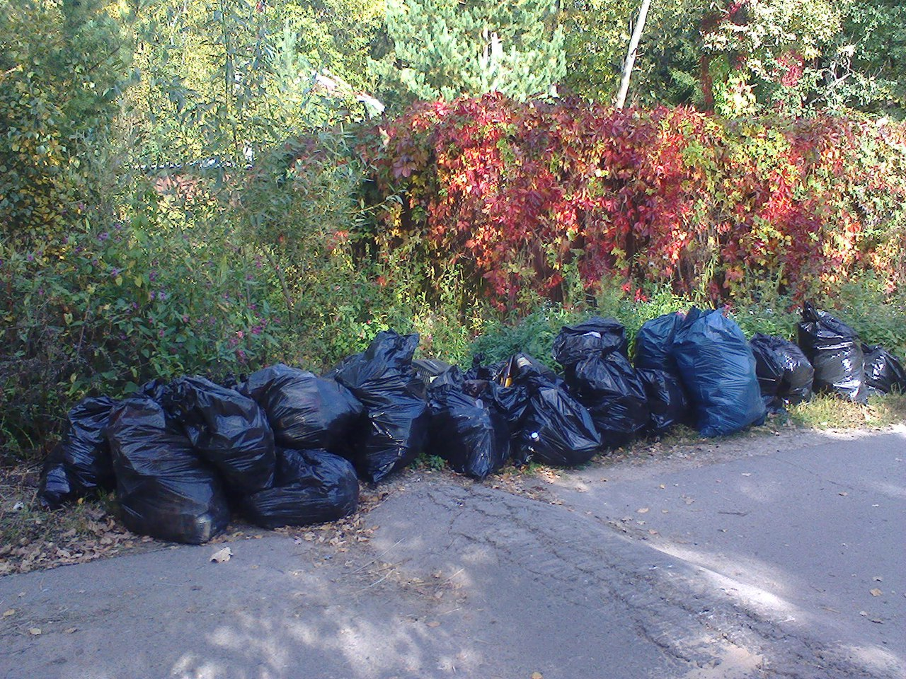 Уборка леса в Опалихе